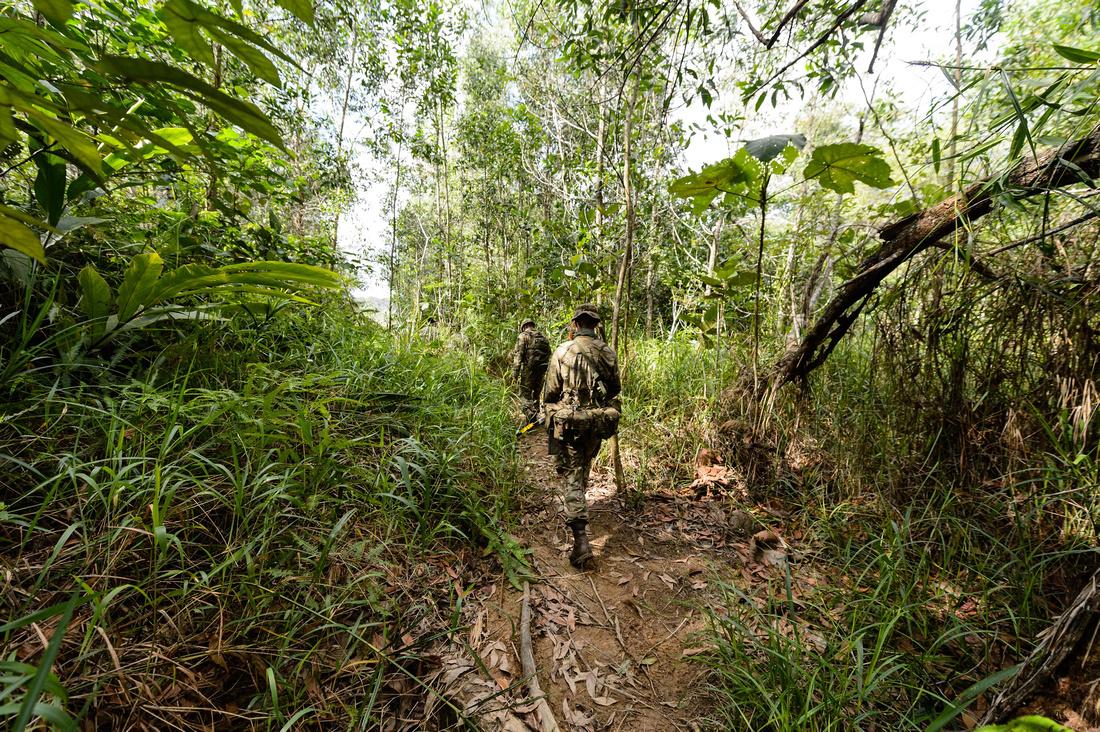 Jungle scenes in Brunei