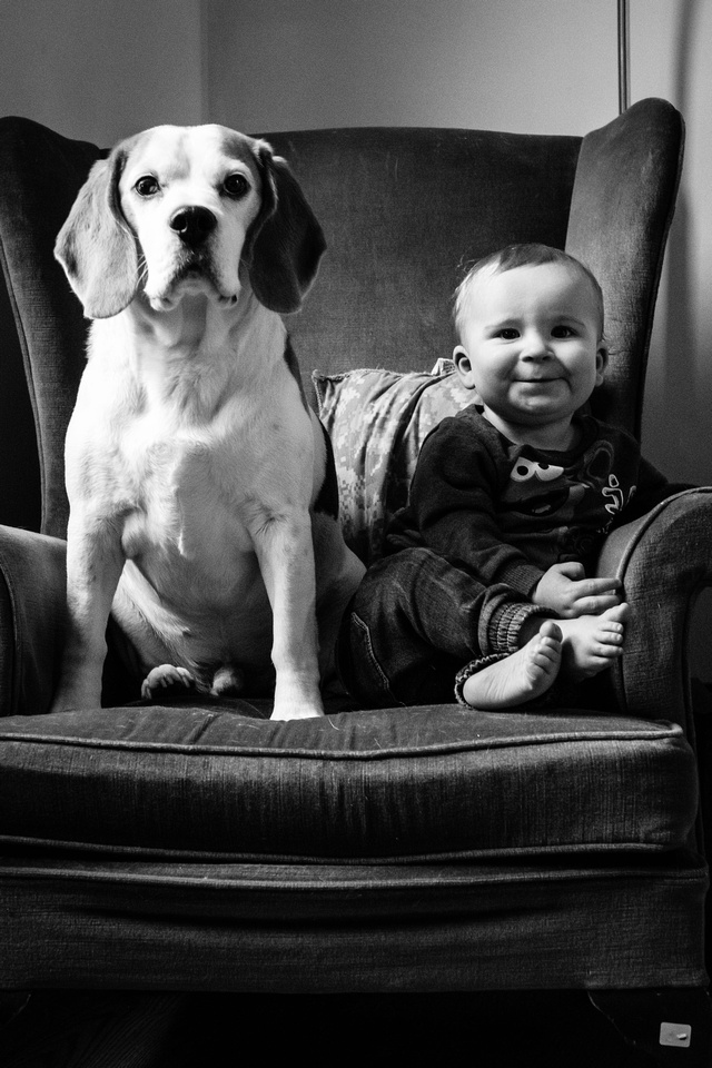 Young smiling child sits with beagle on wingback chair.