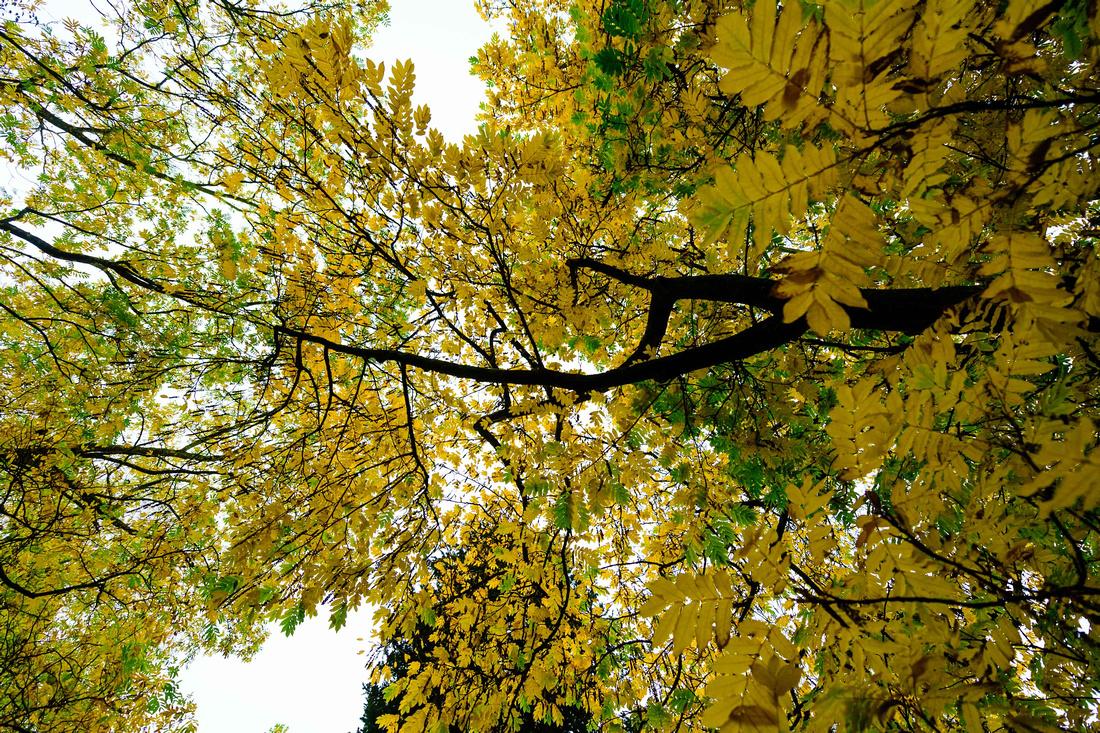 autumnal trees at westonbirt