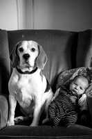 The Beagle and the Baby, Jasper and Stanley friends for life.