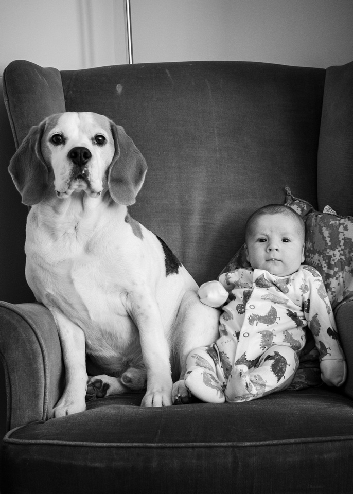 Jasper the Beagle and Stanley the baby pose for their monthly portrait